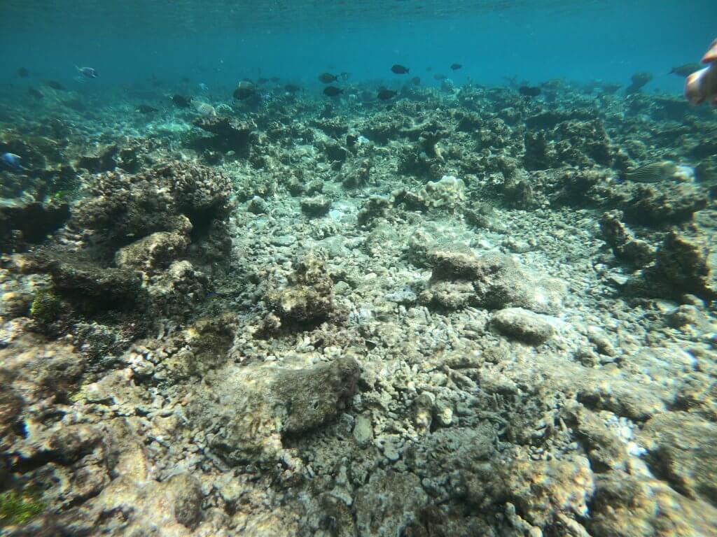 モルディブ ロビンソンクラブ 海の中の様子